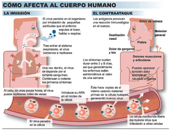 virus-gripe-2