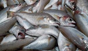pescado-acidos-omega-3